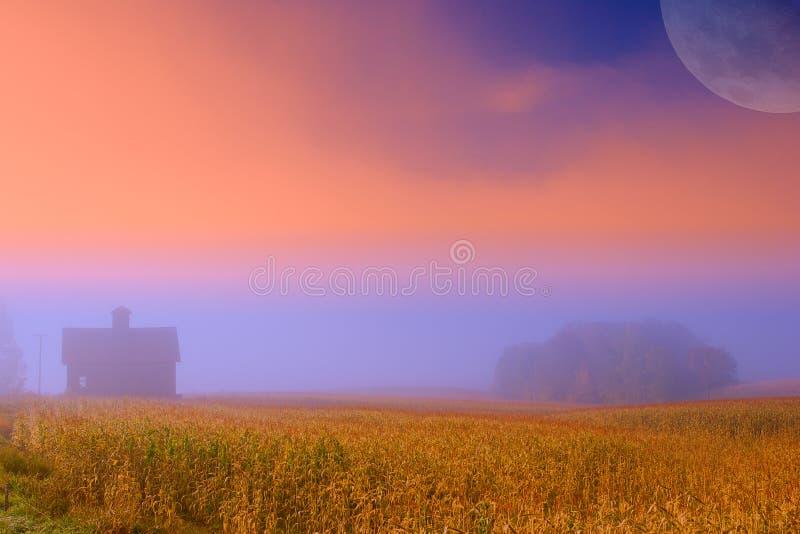 Moonrise über Getreidefeld des frühen Morgens bei Sonnenaufgang. lizenzfreies stockbild