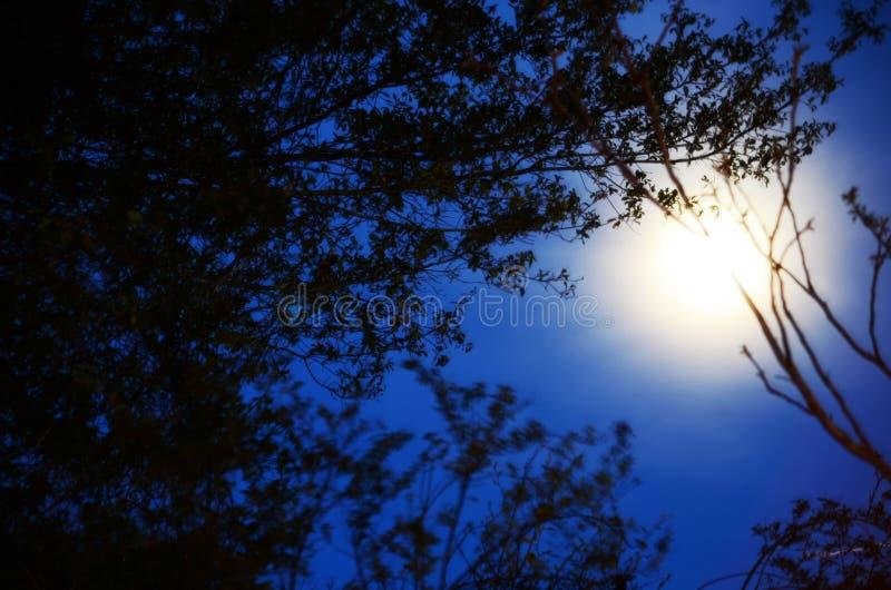 moonrise arkivfoton