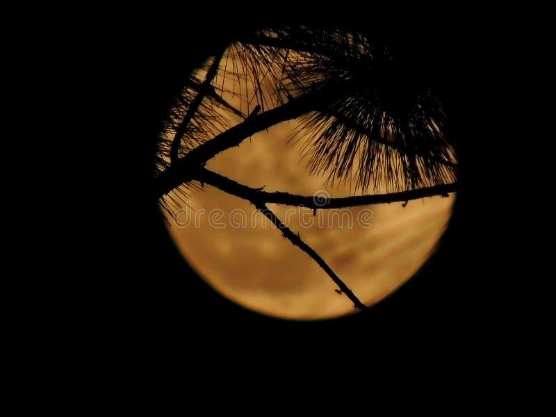 Moonrise royalty free stock photo