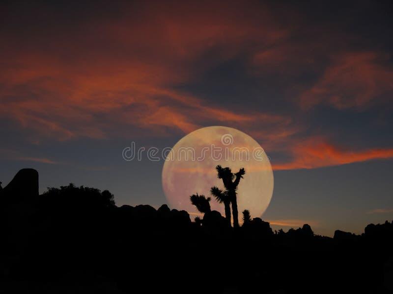 moonrise joshua tree zdjęcia stock