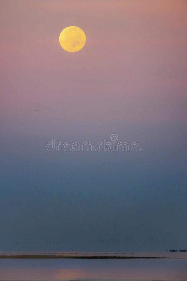 Moonset with pink sky stock image