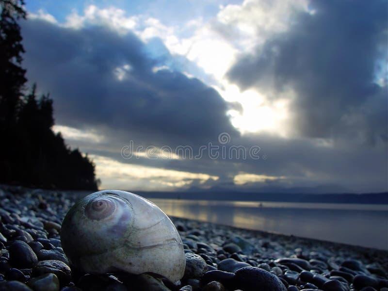 Moonshell na praia imagem de stock
