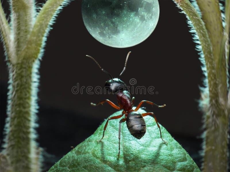 Moonwalk of ant. Garden ant dancing under moon stock photo