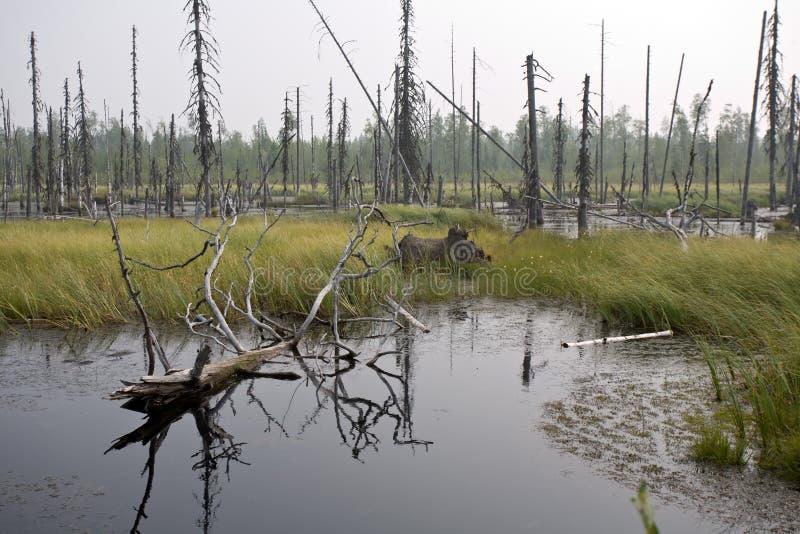 Download Moor stock image. Image of marsh, green, landscape, wood - 22499293