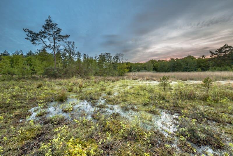 Moor fen in nature reserve. Moor fen on Ontwijk estate nature reserve in Friesland, the Netherlands stock images