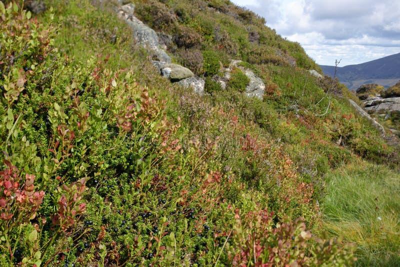 Moorbeetpflanzen in Chalamain Gap stockfotografie