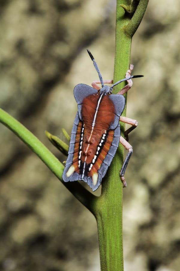 Moordenaar Bug royalty-vrije stock foto's