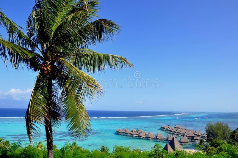 Moorea, γαλλική Πολυνησία στοκ φωτογραφία