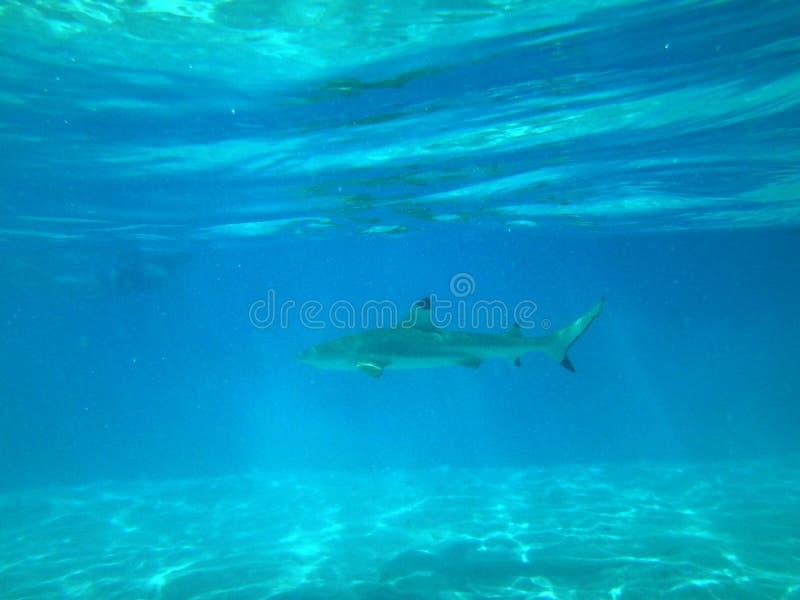Download Moorea imagen de archivo. Imagen de francés, barco, pescados - 64206437