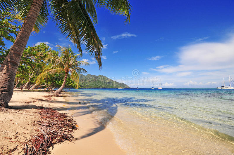 Moorea Beach and Palm, Tahiti, French Polynesia stock images