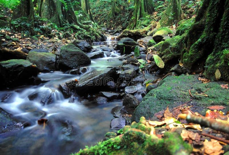 Moorea-Regenwald-Kaskade stockfotos