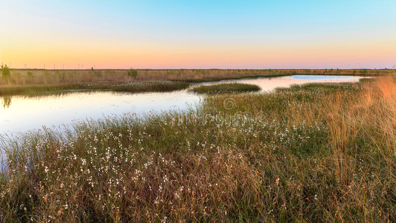 Moorerlebnispfad nearUplengen. East Frisia or Eastern Friesland is a coastal region in the northwest of the German federal state of Lower Saxony. It is the royalty free stock image