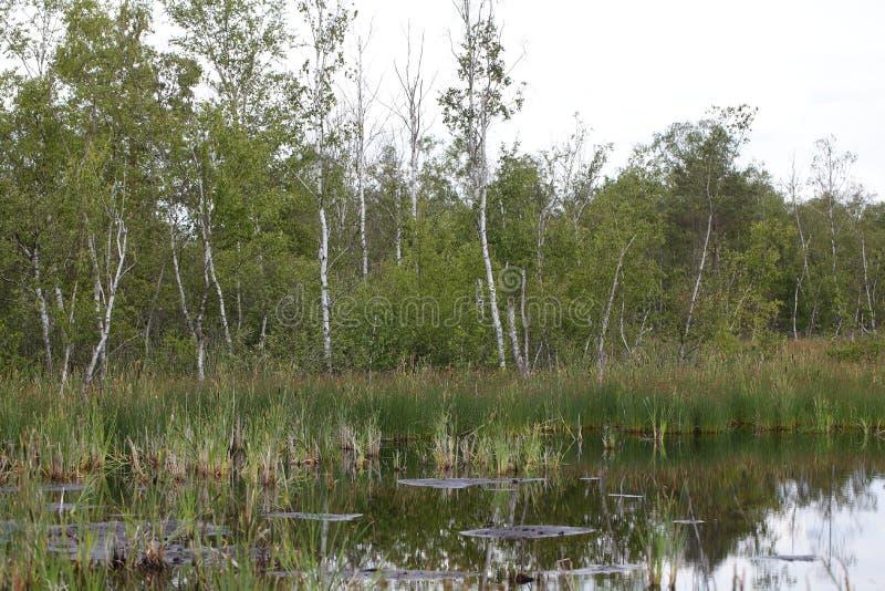 Moorland湖 免版税库存图片