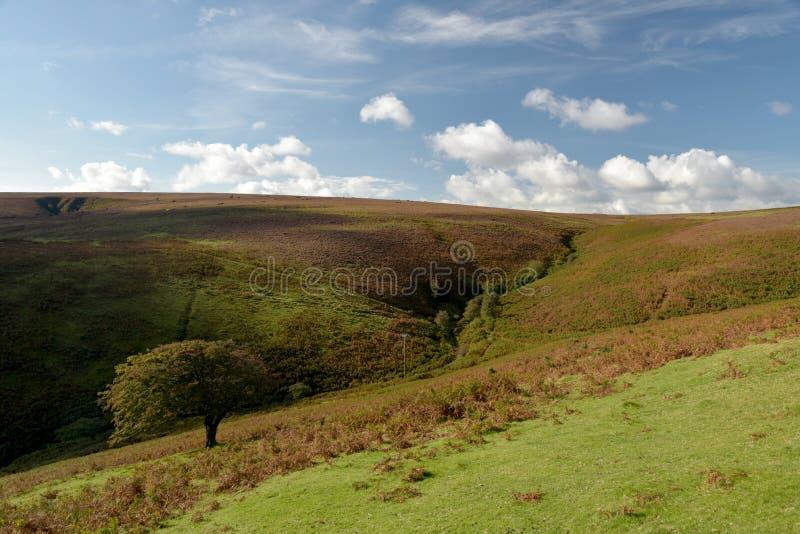 Moorland above Doone Valley, Exmoor, North Devon. Open expanses of heather and gorse moorland above Doone Valley near Malmsmead, Exmoor, North Devon stock image