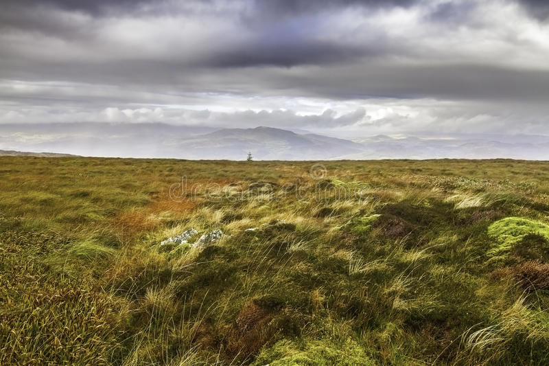 Moorland and bog in Snowdonia National Park in Wales royalty free stock photography