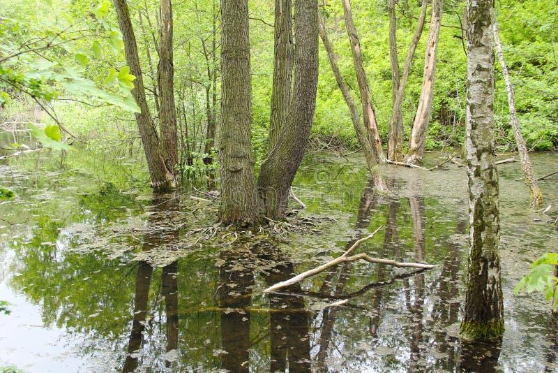 Moorland jezioro zdjęcia stock