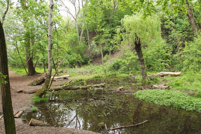 Moorland jezioro zdjęcie stock