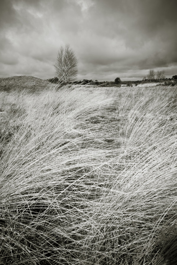Free Moorland Landscape In B/w Royalty Free Stock Photography - 4710947