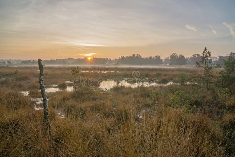 Moorland przy wschodem słońca fotografia royalty free