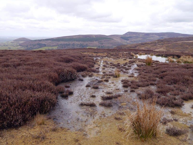 Moorland scena wrzos i woda zdjęcia royalty free