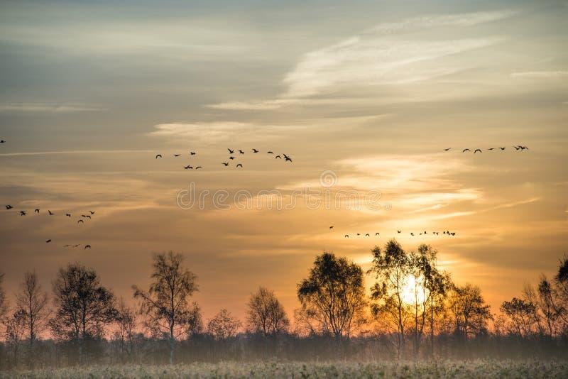 Moorland w jesieni obrazy royalty free