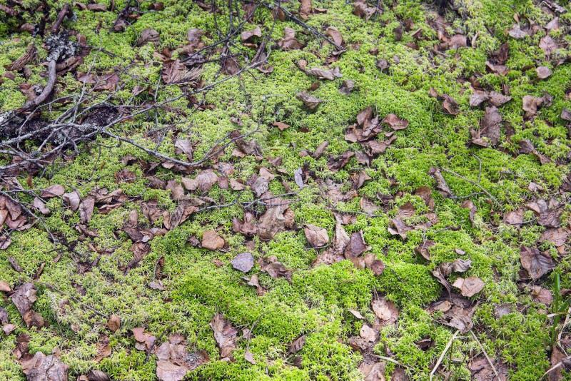 Moorland z liśćmi i mech zdjęcie stock