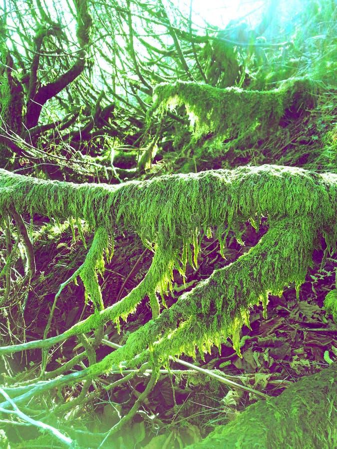 Moos über Bäumen lizenzfreie stockfotografie