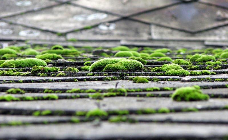 Moos auf dem Dach stockfotografie