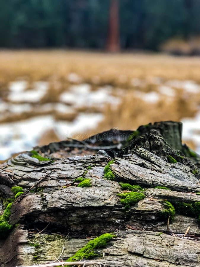 Moos auf Tote und gefallener Baum stockfoto