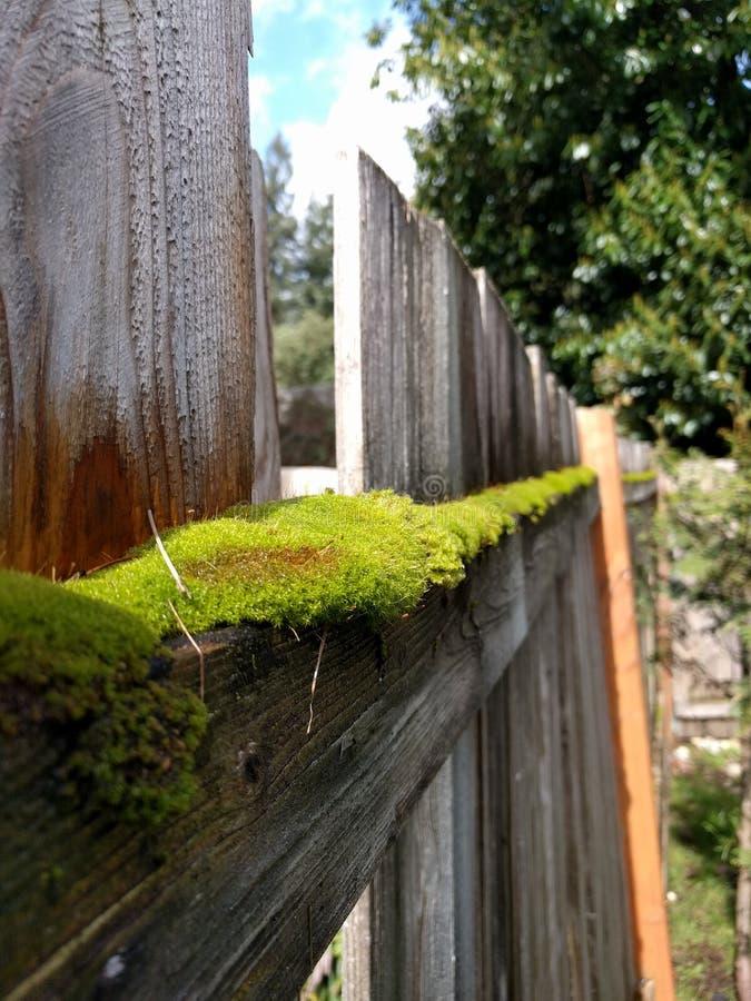 Moos auf Zaun stockbild