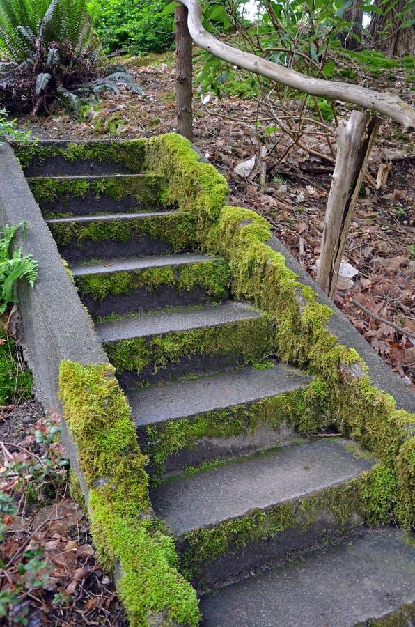 Moos Bedeckte Treppe Im Garten Stockbild - Bild von draußen, wald ...