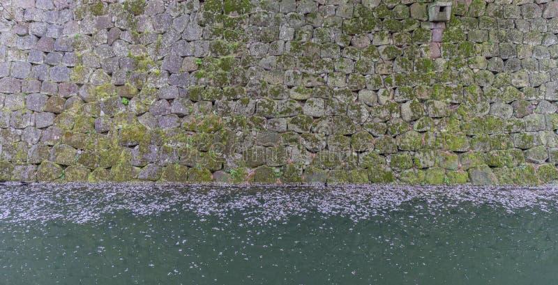 Moos bedeckte Wände und der Burggraben, der mit gefallener Kirschblüte archiviert wird, verlässt stockfotografie