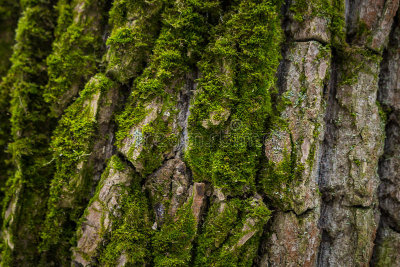 Moos coated pine bark macro stock images