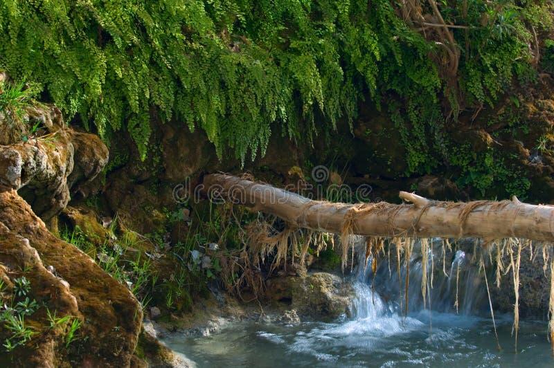 Moos hängt von einem Baumast, der zu einem Damm auf dem Havasu-Nebenfluss ausdehnt stockfoto
