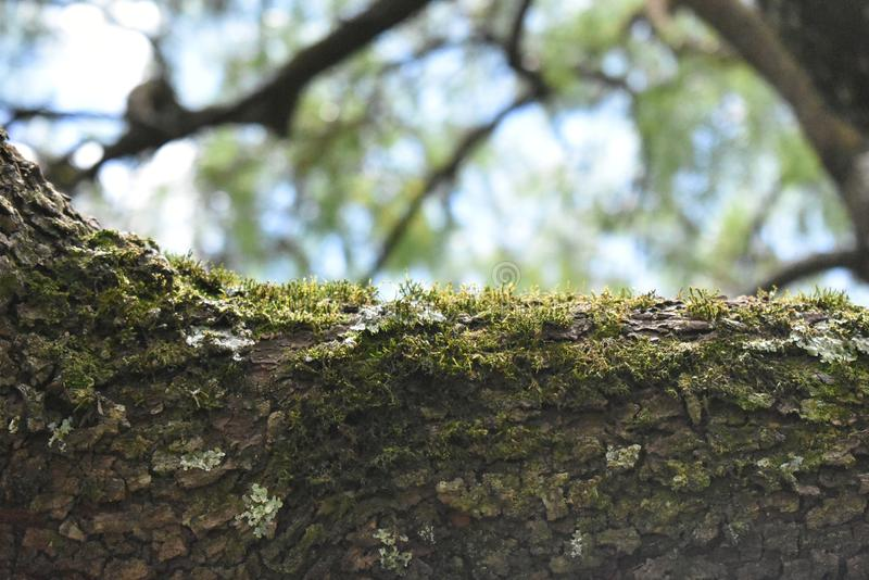 Moos im Baum stockfotos