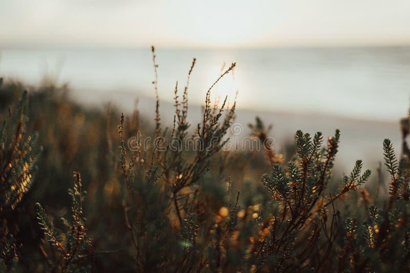 Moos im Wald unweit vom Meer auf dem Sonnenuntergang im Sommer lettland lizenzfreies stockbild