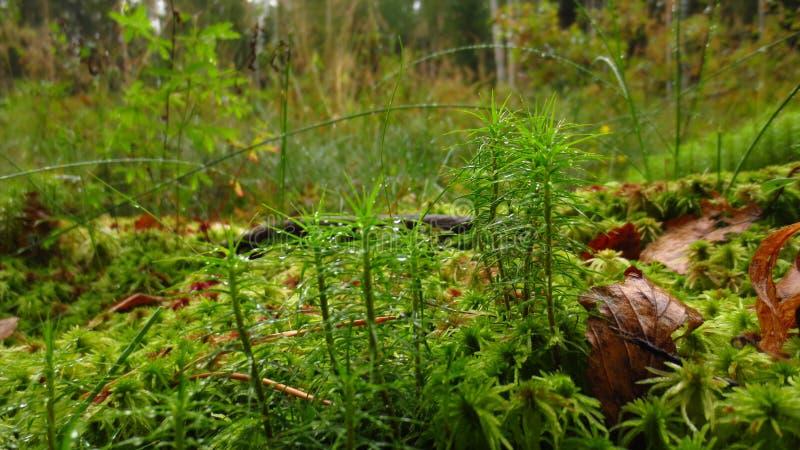 Moos und Gras stockfotos