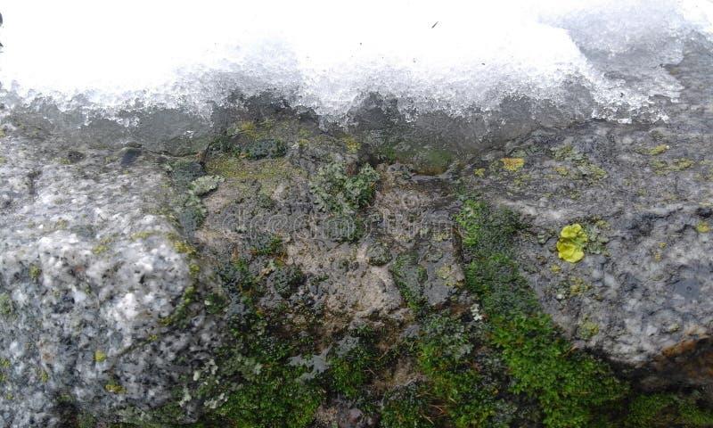 Moos und Schnee auf einer Steinwand stockfotos