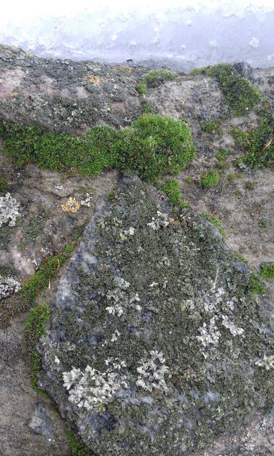 Moos und Schnee auf einer Steinwand lizenzfreie stockfotografie