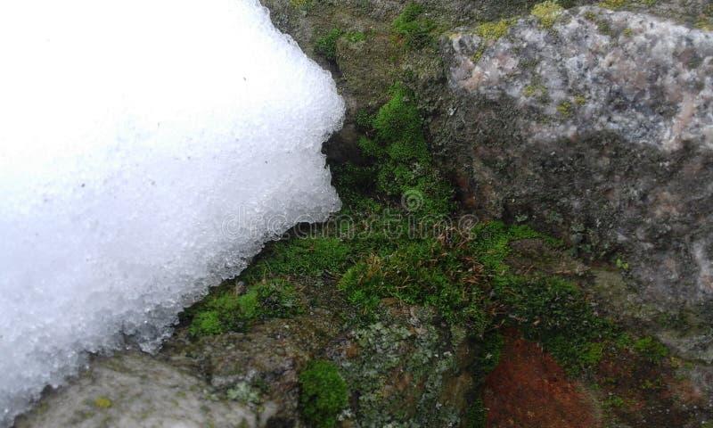 Moos und Schnee auf einer Steinwand lizenzfreie stockfotos