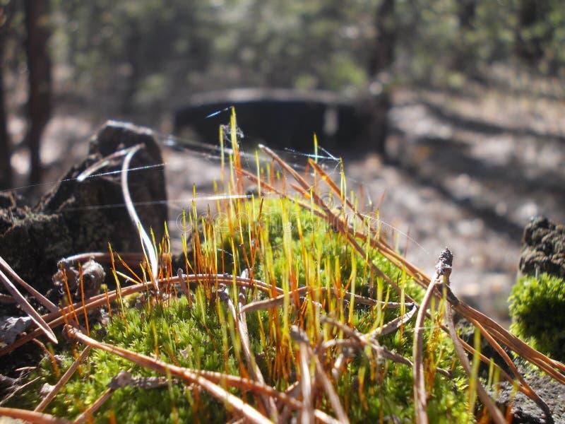 Moos und Spinnennetze stockfotografie