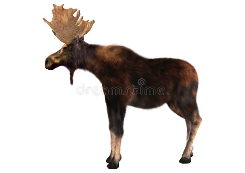 moose royalty ilustracja