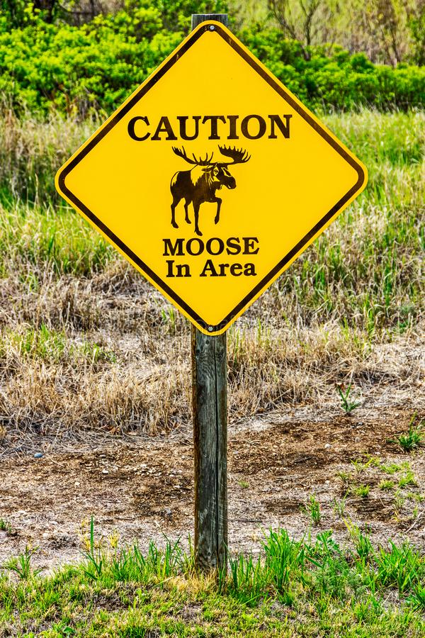 Moose in Area Sign. Caution sign warning of the possiblity of moose in the area stock images