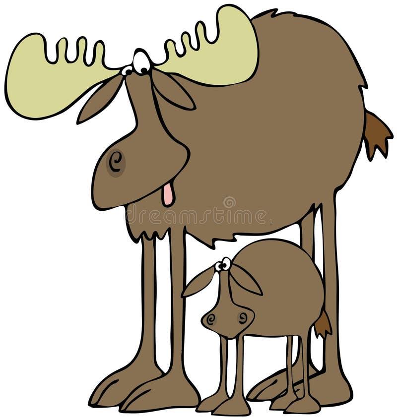 Download Moose and calf stock illustration. Illustration of offspring - 36297418