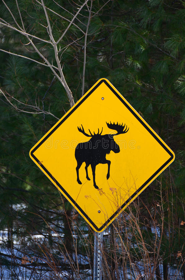 Moose crossing sign royalty free stock photos