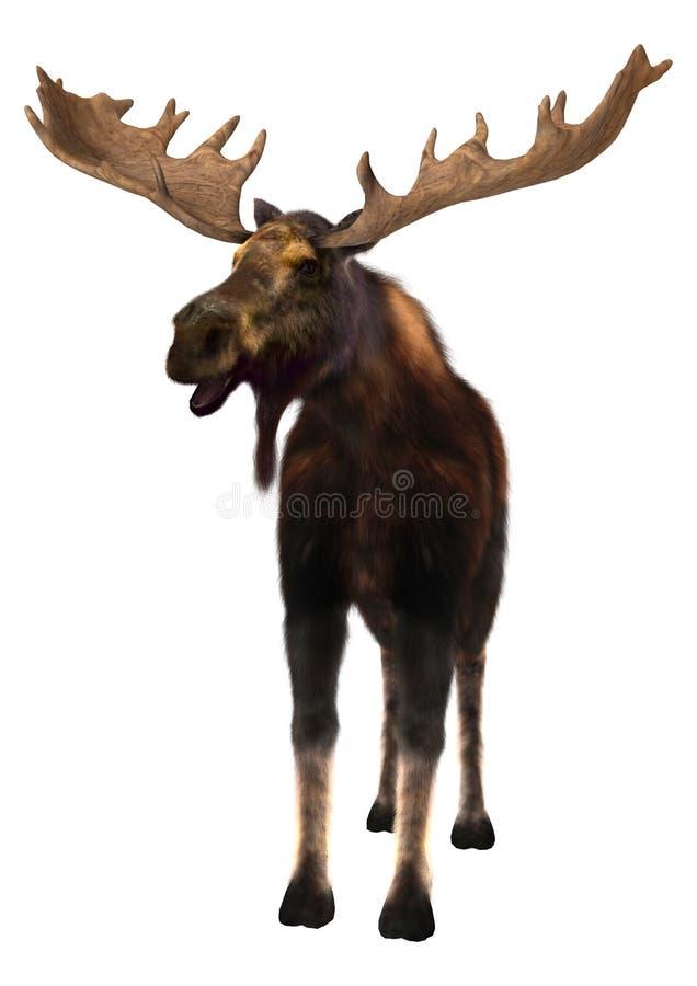 Moose vector illustration