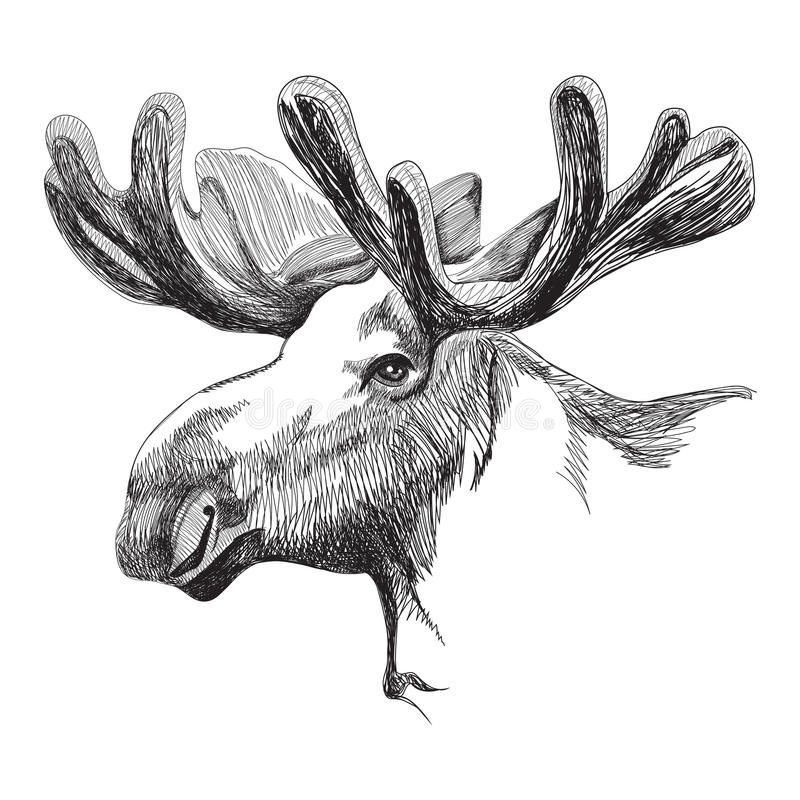 Moose head in graphic style vector illustration
