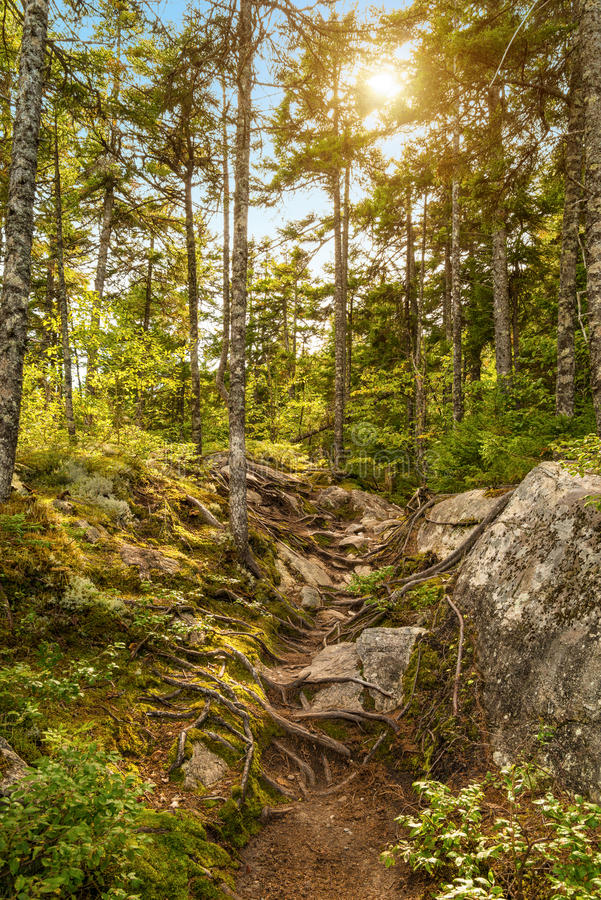 Moose Horn Trail Path. (Fundy National Park, New Brunswick, Canada royalty free stock image