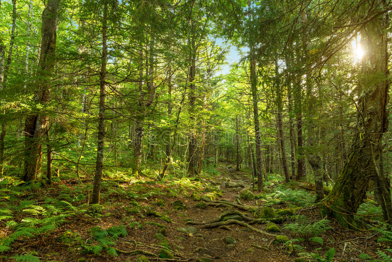 Moose Horn Trail Path. (Fundy National Park, New Brunswick, Canada stock photo