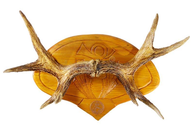 Moose horns royalty free stock photo